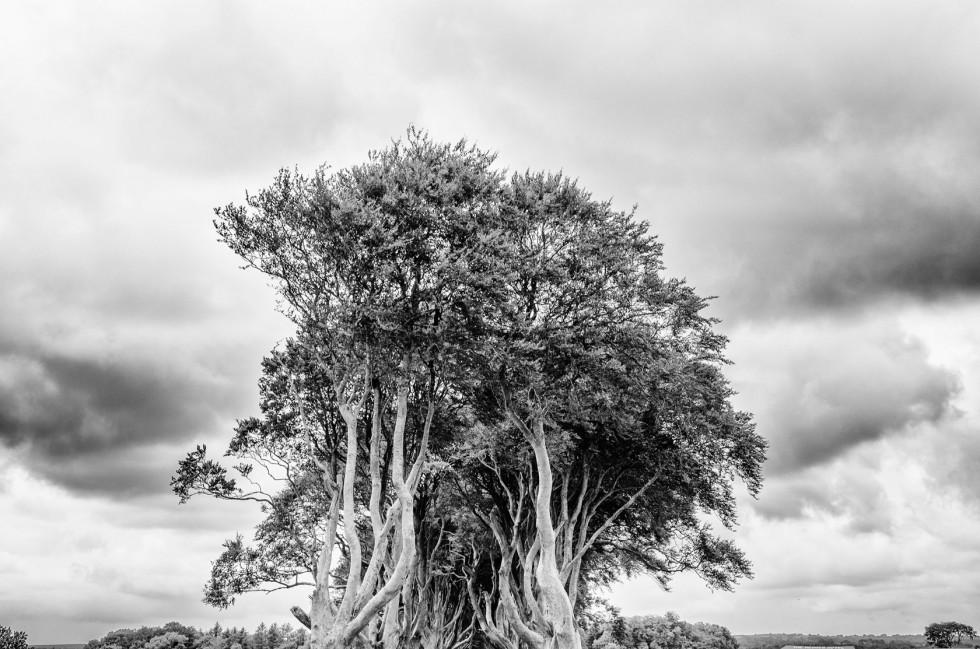 Dark Hedges Nord Irland Norden Ireland
