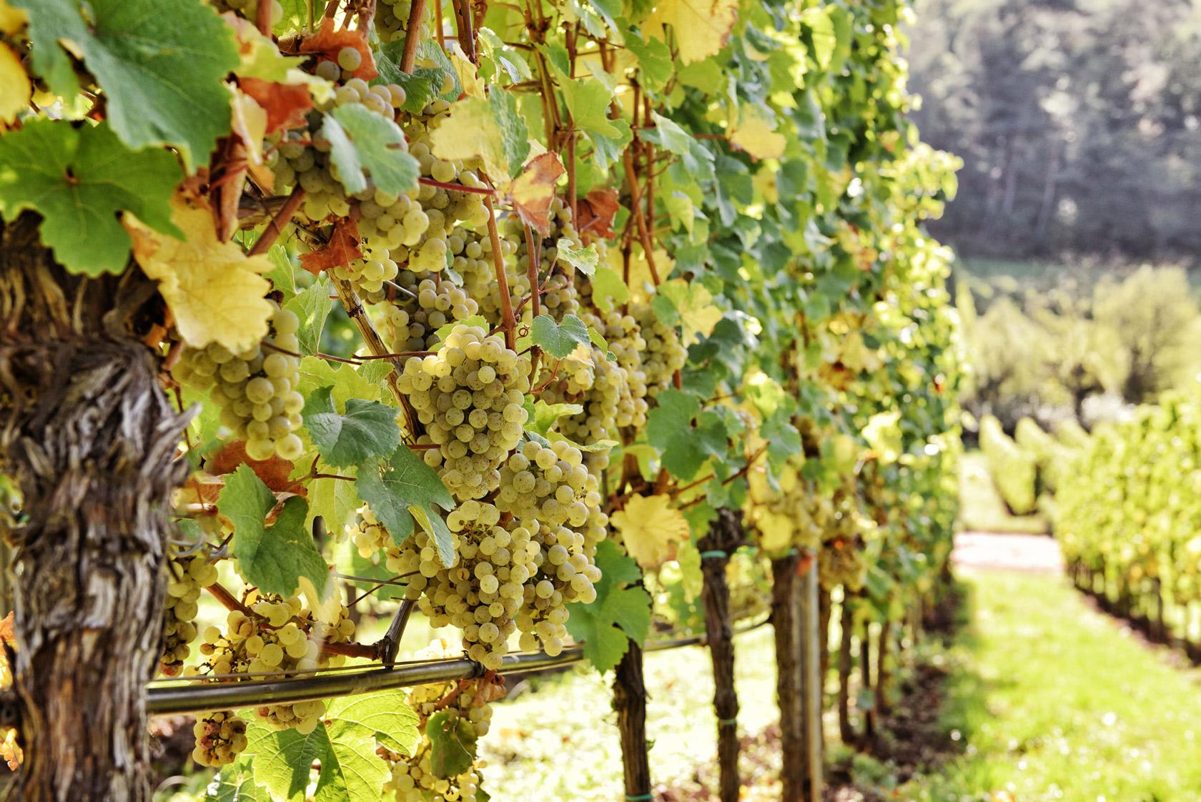 Stimmungsvolle Weinfotografie und professionelle Flaschenfotografie für Winzer und Weinhandel deutschlandweit